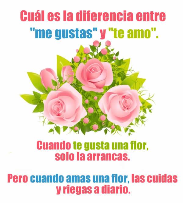 Cuando amas una flor