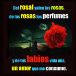 Imagenes con Rosas: Perfume del amor