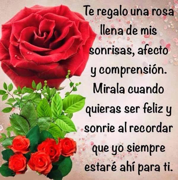 Imagenes romanticas de rosas rojas de amor