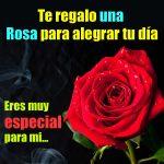 Imagenes bonitas de rosas rojas