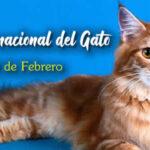 20 de Febrero Dia del Gato 2021