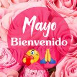 Frases de Bienvenido Mayo con imagenes lindas